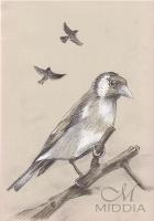 19 Ptaki