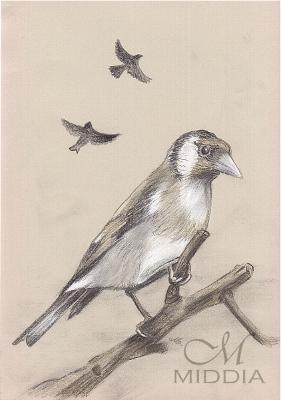 12 - Ptaki