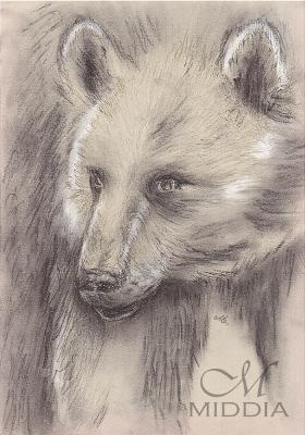 15 - Niedźwiedź