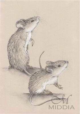 23 - Myszy